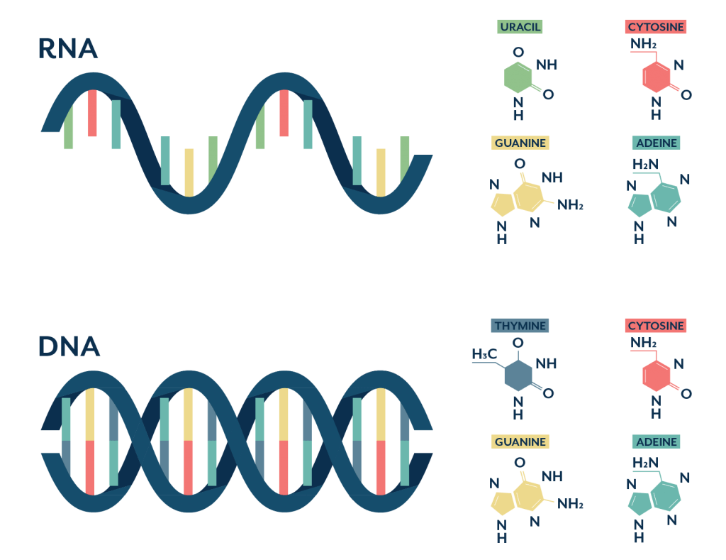 18s vs 16s testing - compare DNA and RNA
