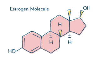 Estrogen molecule illustration