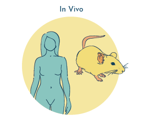 In vivo vs. in vitro - UTI research