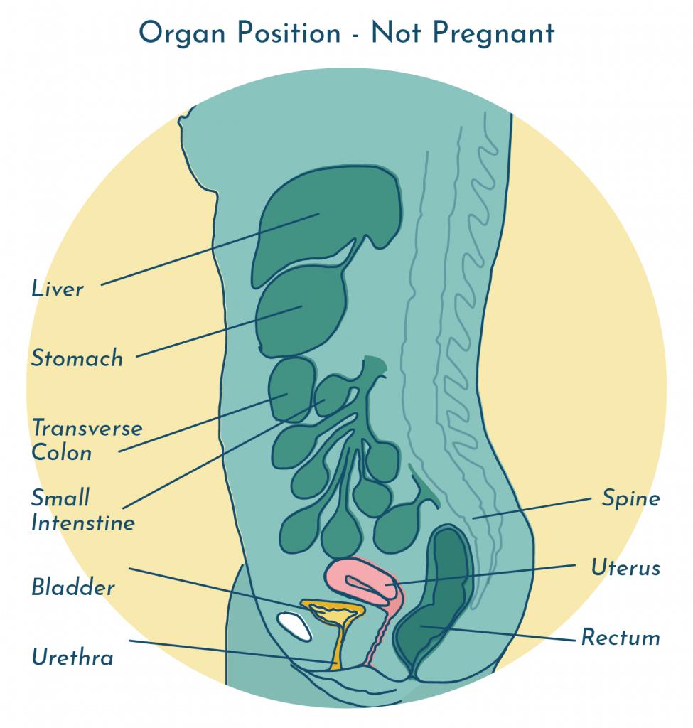 UTI during pregnancy - organ position when not pregnant