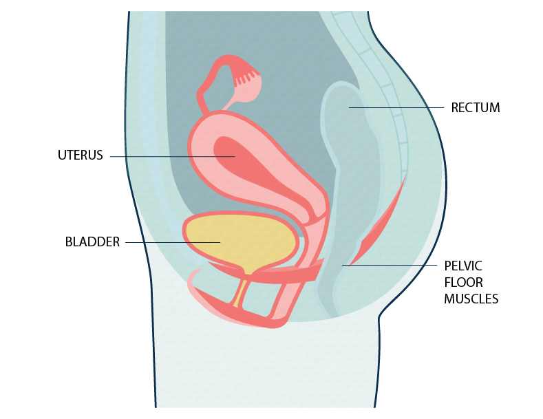 Urinary incontinence and the pelvic floor - female