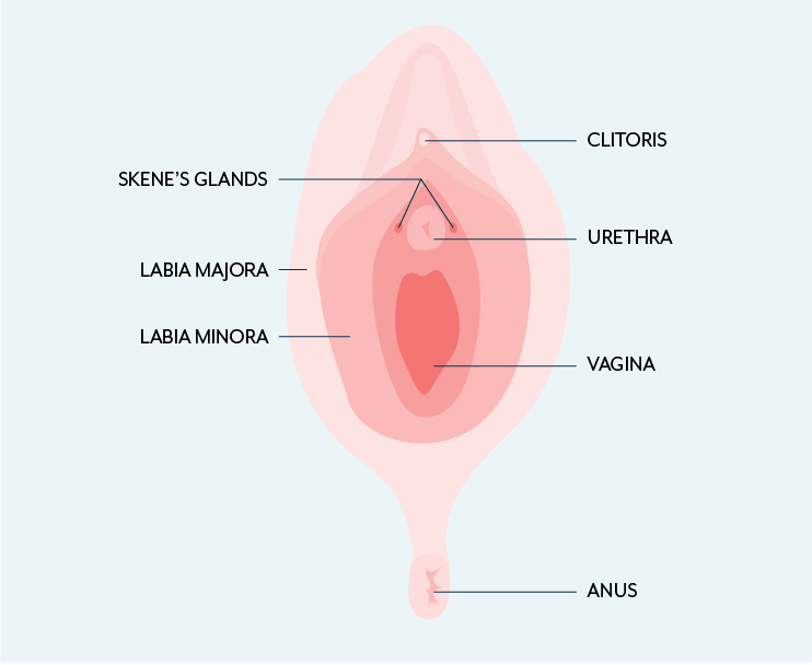 Skenitis of the skene's glands, or para urethral glands, and its relationship with lower urinary tract symptoms.